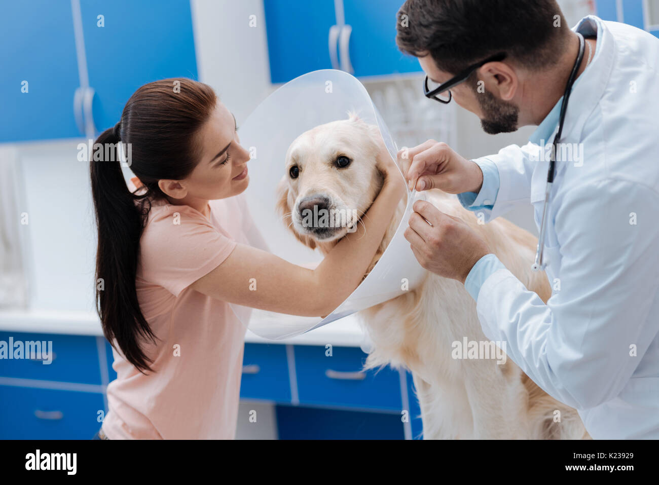 Beautiful owner calming her Labrador - Stock Image