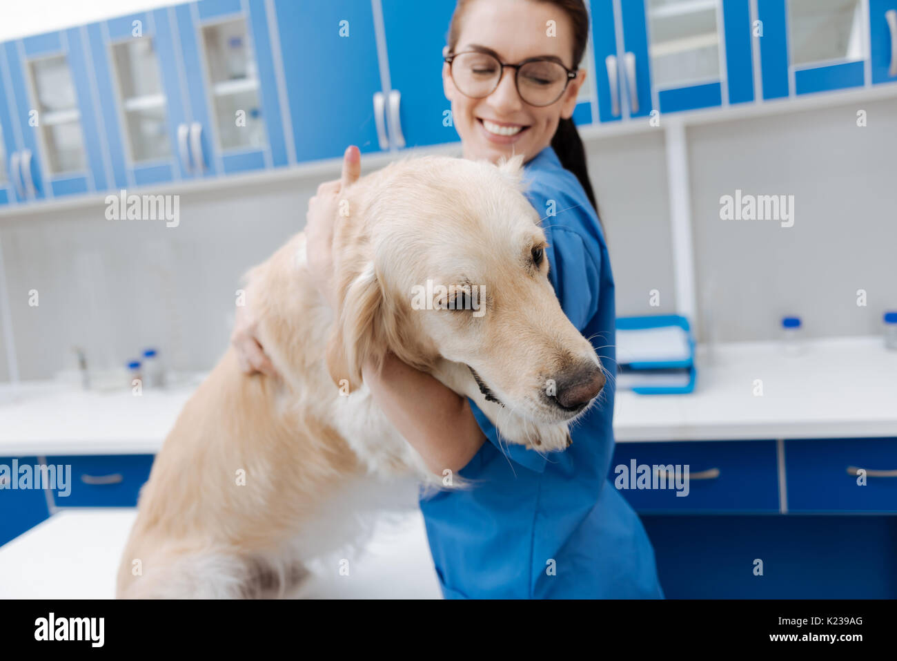 Delighted veterinary embracing docile dog - Stock Image