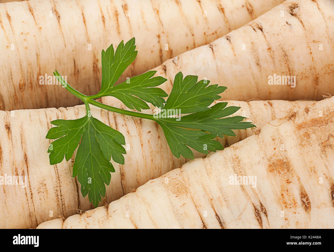 Ripe parsley vegetable root closeup background - Stock Image