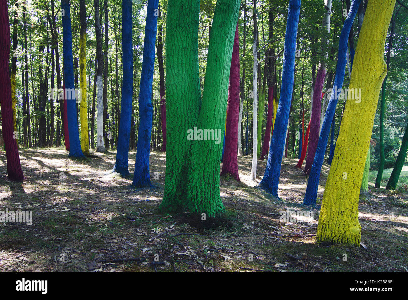 colorful forest with tree bark painted in many colors Stock Photo ...