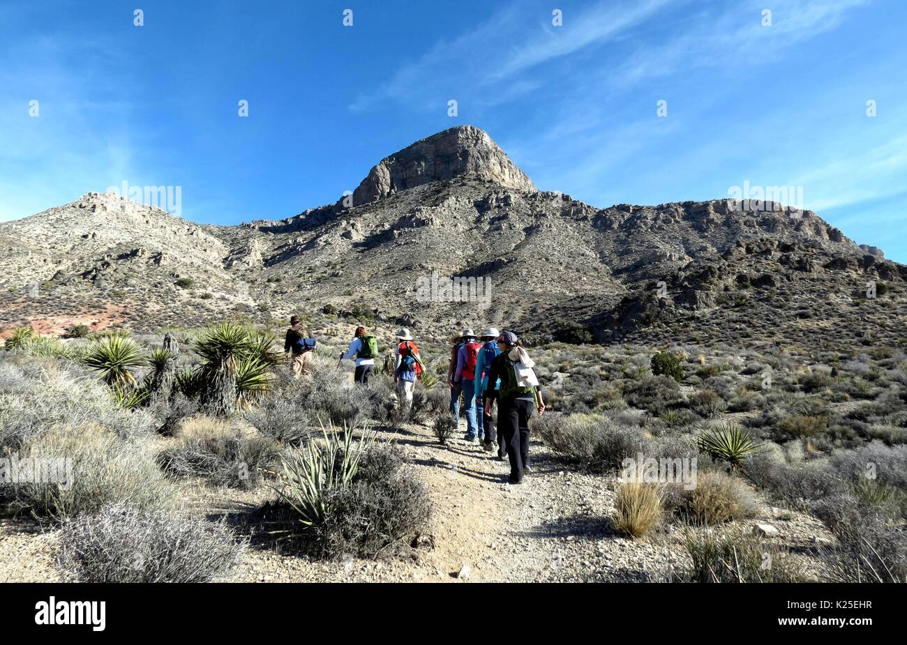 Hikers follow the Turtlehead Peak Trail to Turtlehead Mountain at the Red Rocks Canyon National Conservation Area January 5, 2015 near Las Vegas, Nevada. - Stock Image