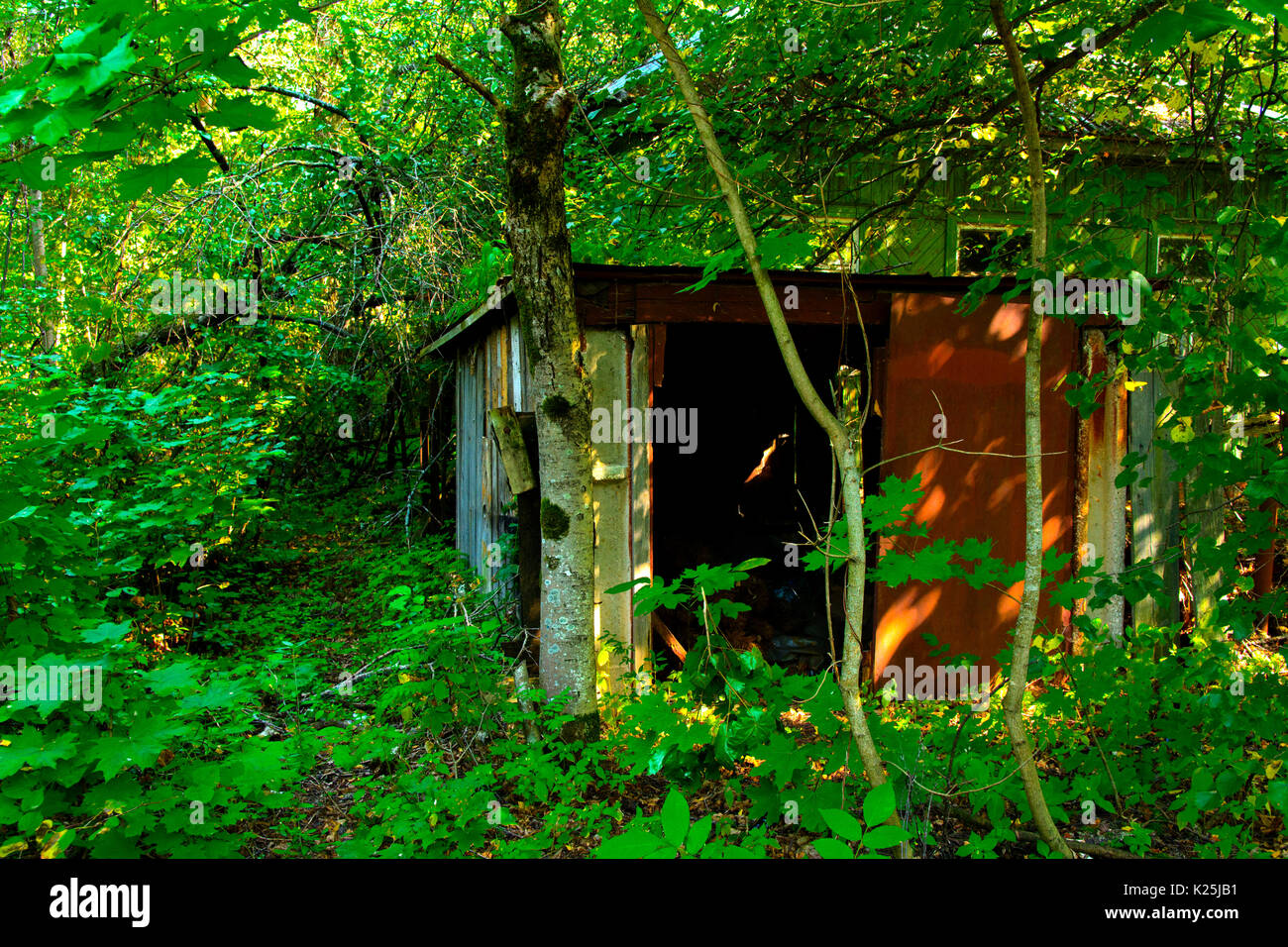 Destroyed houses in which people lived in a dead radioactive zone. Consequences of the Chernobyl nuclear disaster and vandalism, August 2017. - Stock Image