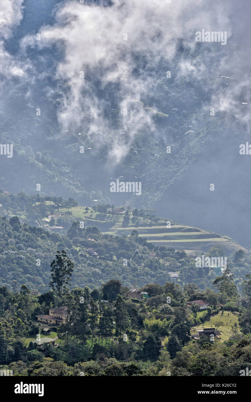 Fragmented cloud Forest site of San Antonio on the Western Andes of Colombia - Stock Image