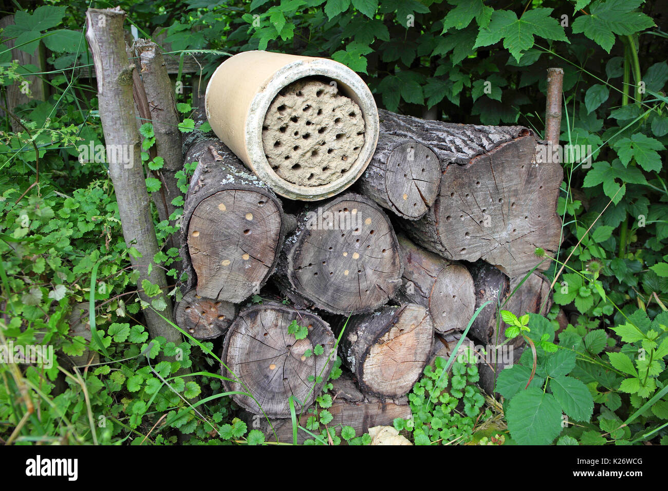 Wooden pile with drillings as a nesting aid for solitary wild bees, solitary bees, Germany - Stock Image