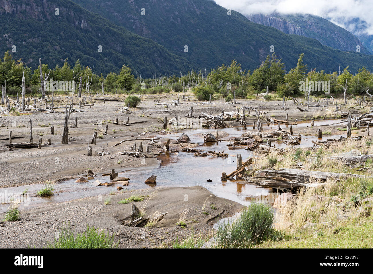 Bosque Muerta (dead forest from Volcano Hudson erupting 1991) Balmaceda to Puerto Rio Tranquilo route highway road 7  Patagonia  Chile - Stock Image