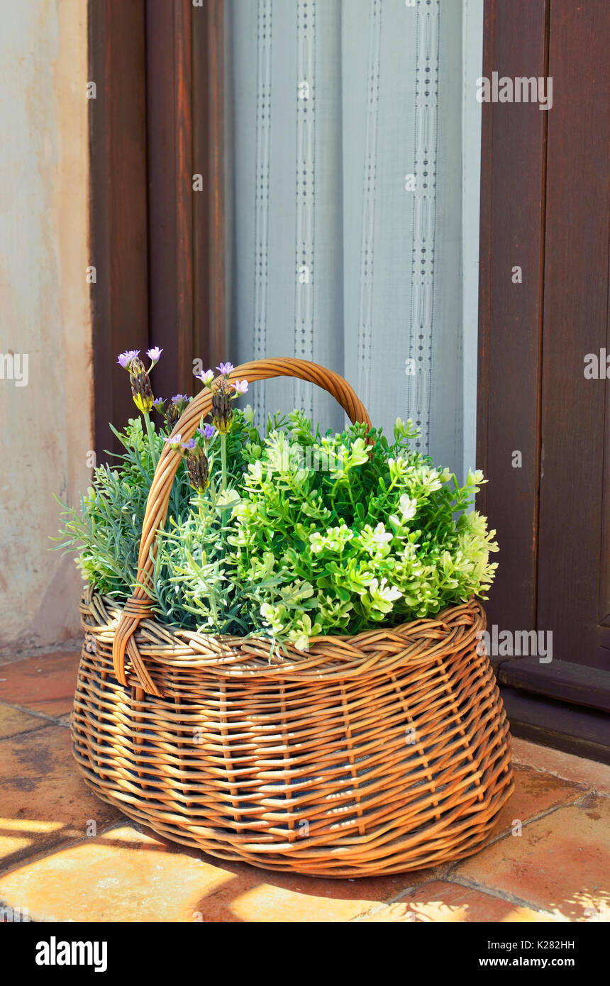 Wicker basket with beautiful plants of purple flowers, over the window sill. White curtains of lace at the background. Sunny day. Warm color. - Stock Image