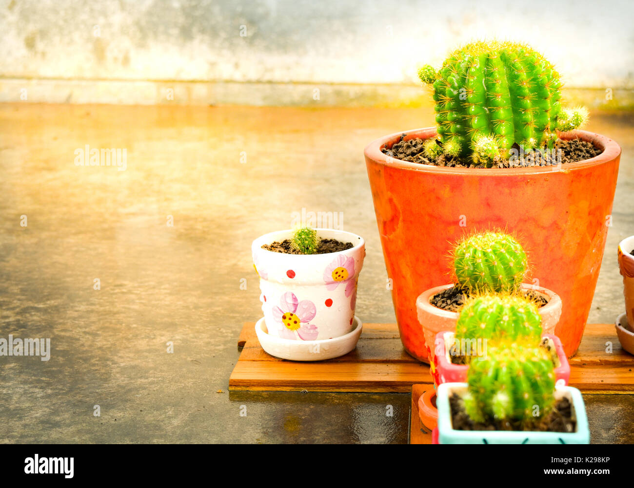 Set Of Cactus On The Wooden Board In Front Home Garden