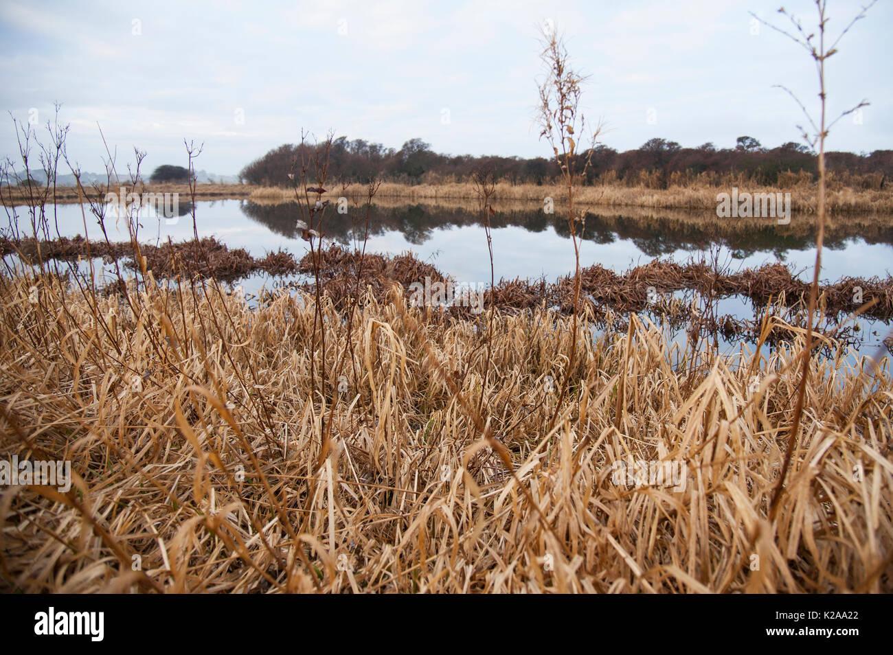 Freshwater loch, Aberlady Bay nature reserve. - Stock Image