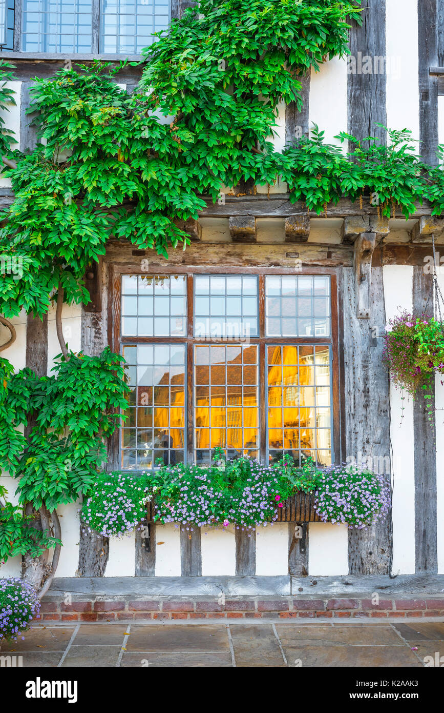 Lavenham Suffolk house colour, exterior detail of wisteria covered medieval half timbered building sited in Market Square Lavenham, Suffolk, England. - Stock Image