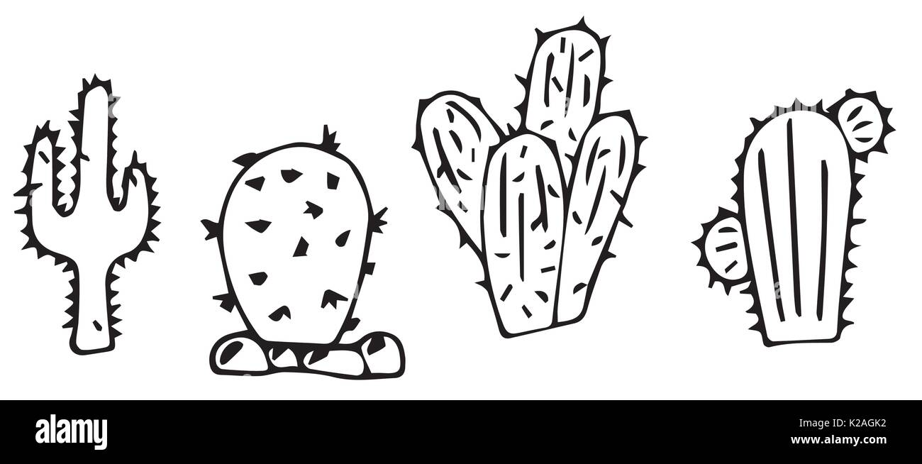 cacti line drawing - Stock Image