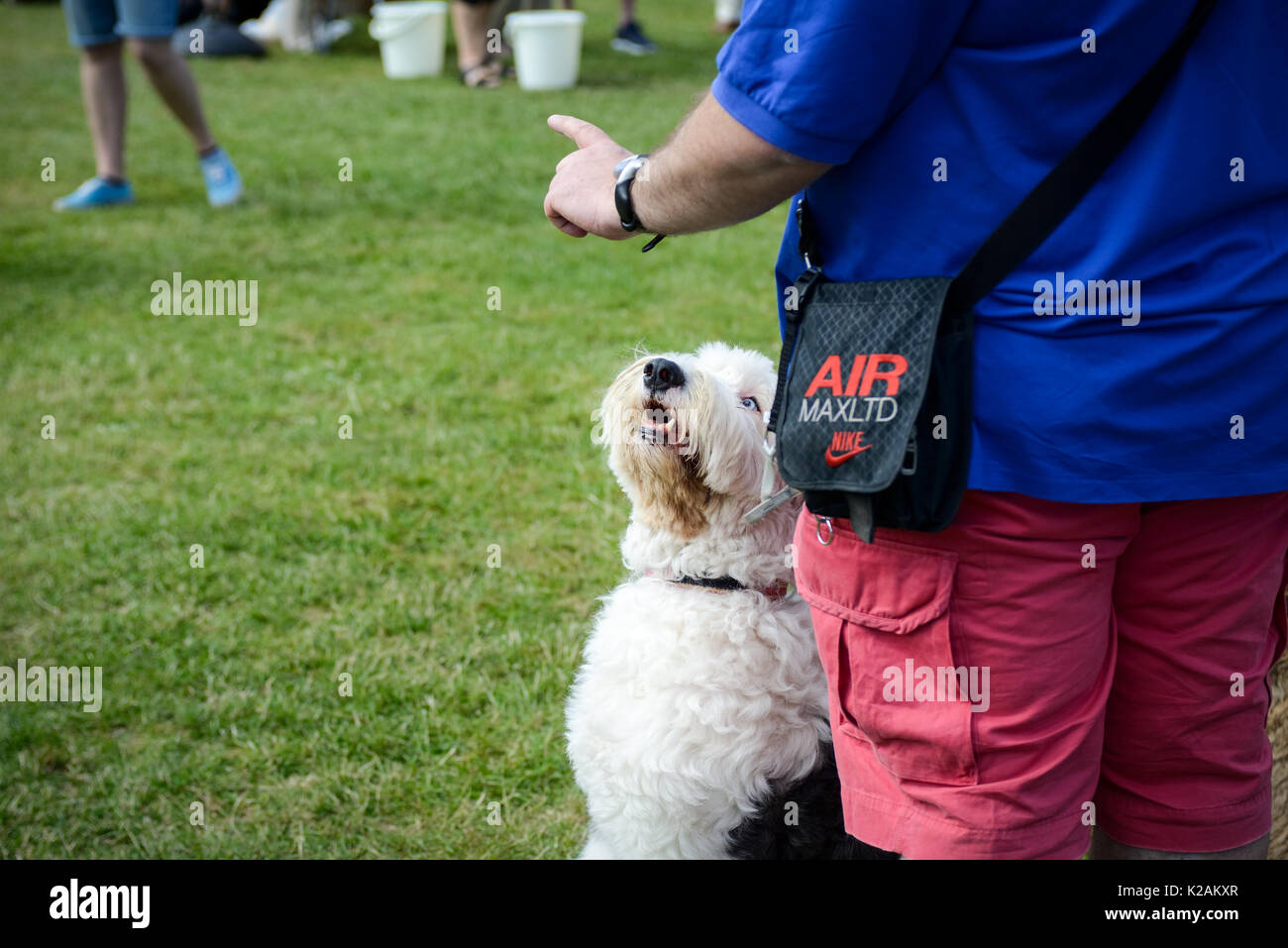 A man instructs his old english sheep dog to stay during a village dog show in England. - Stock Image