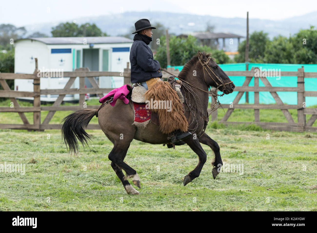 June 3, 2017 Machachi, Ecuador: cowboy wearing furry chaps riding a horse in the Andes - Stock Image