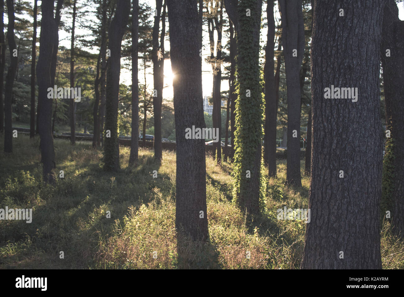 Sunlight coming through trees in the woods Stock Photo