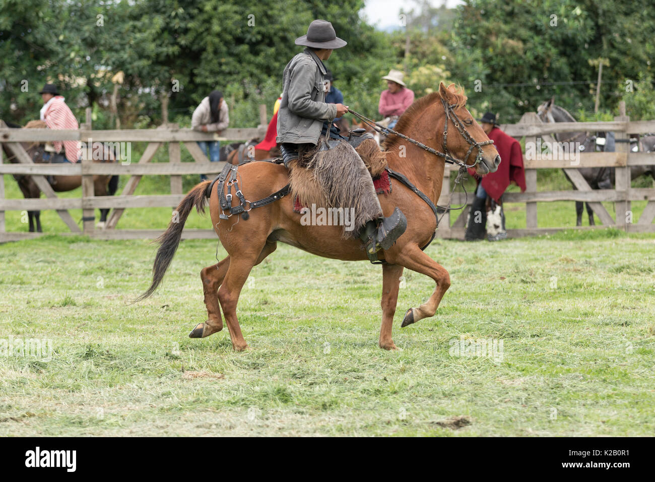 June 3, 2017 Machachi, Ecuador: cowboy from the Andes called 'chagra' on hoseback wearing traditional chaps - Stock Image