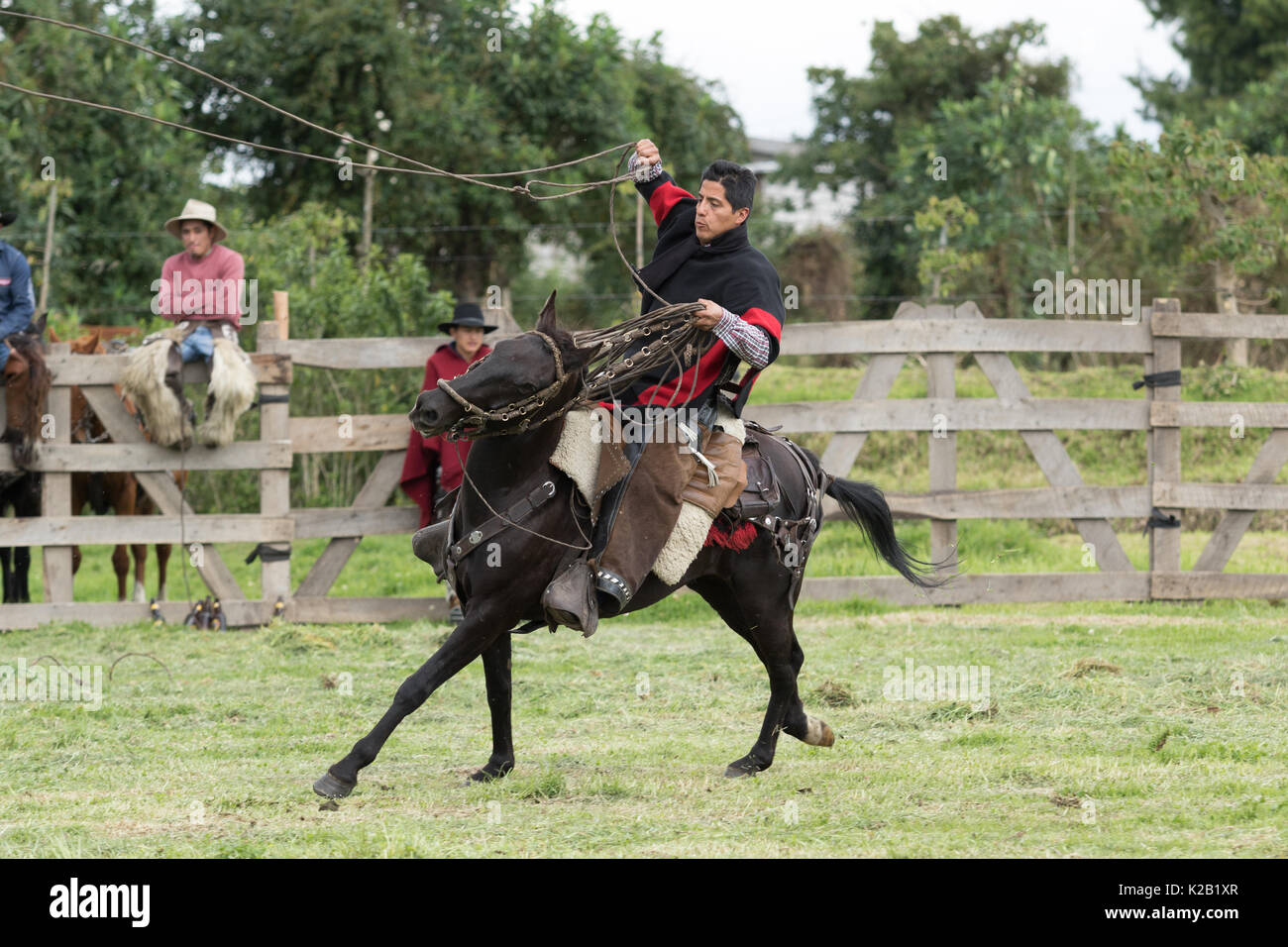 June 3, 2017 Machachi, Ecuador: cowboy in the Andes riding horse and exercising the lasso - Stock Image