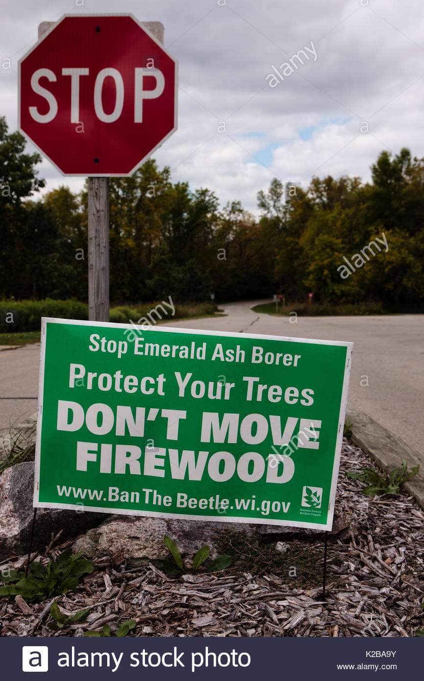 'Don't move Firewood' sign at Mauthe Lake, Wisconsin, alerting campers to help prevent the spread of the invasive species emerald ash borer - Stock Image