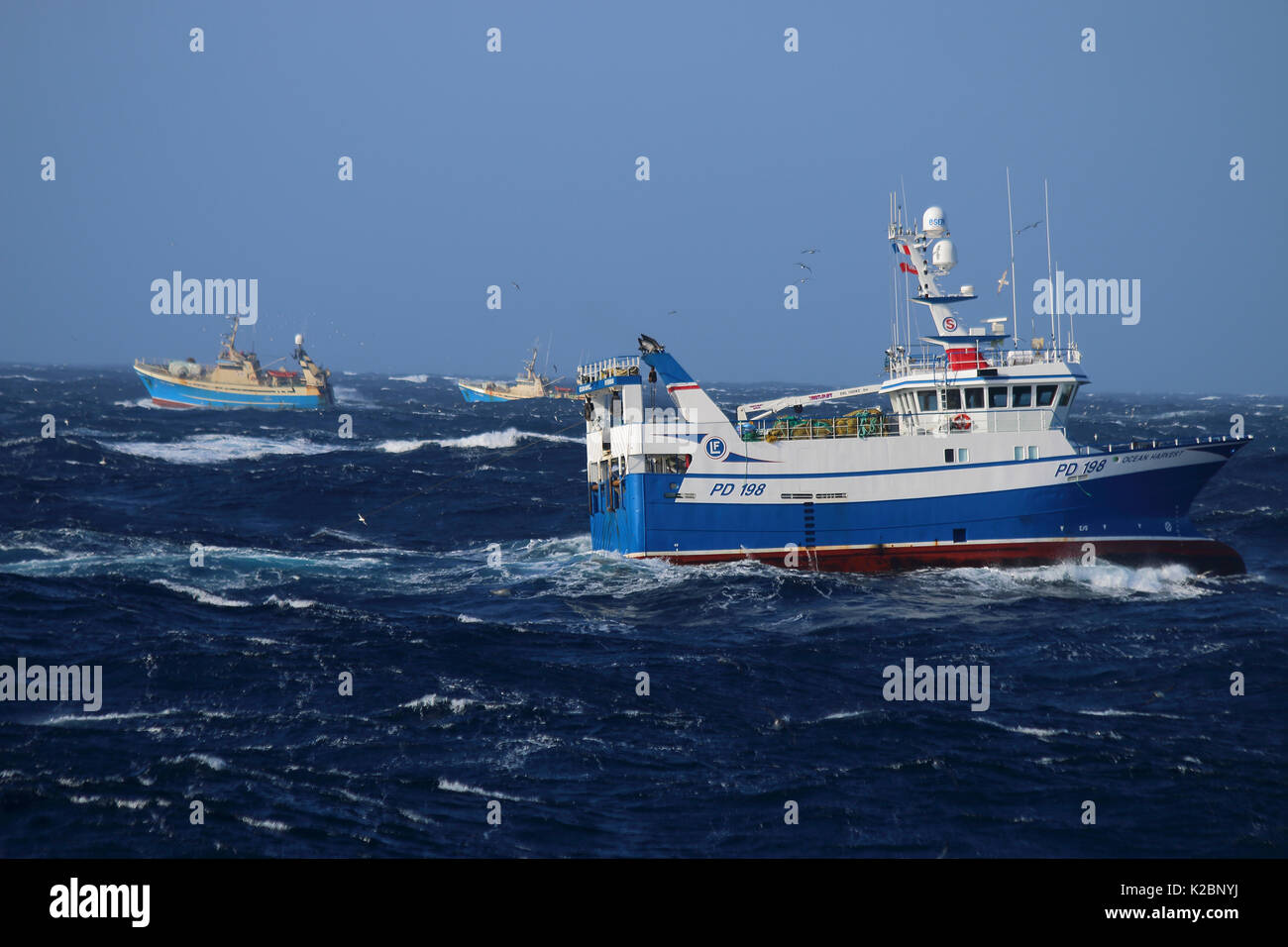 Fishing vessel 'Ocean Harvest' fishing in close proximity to faroese trawlers on the Suduroy Bank, Faroe Islands, April 2015. Property released. - Stock Image