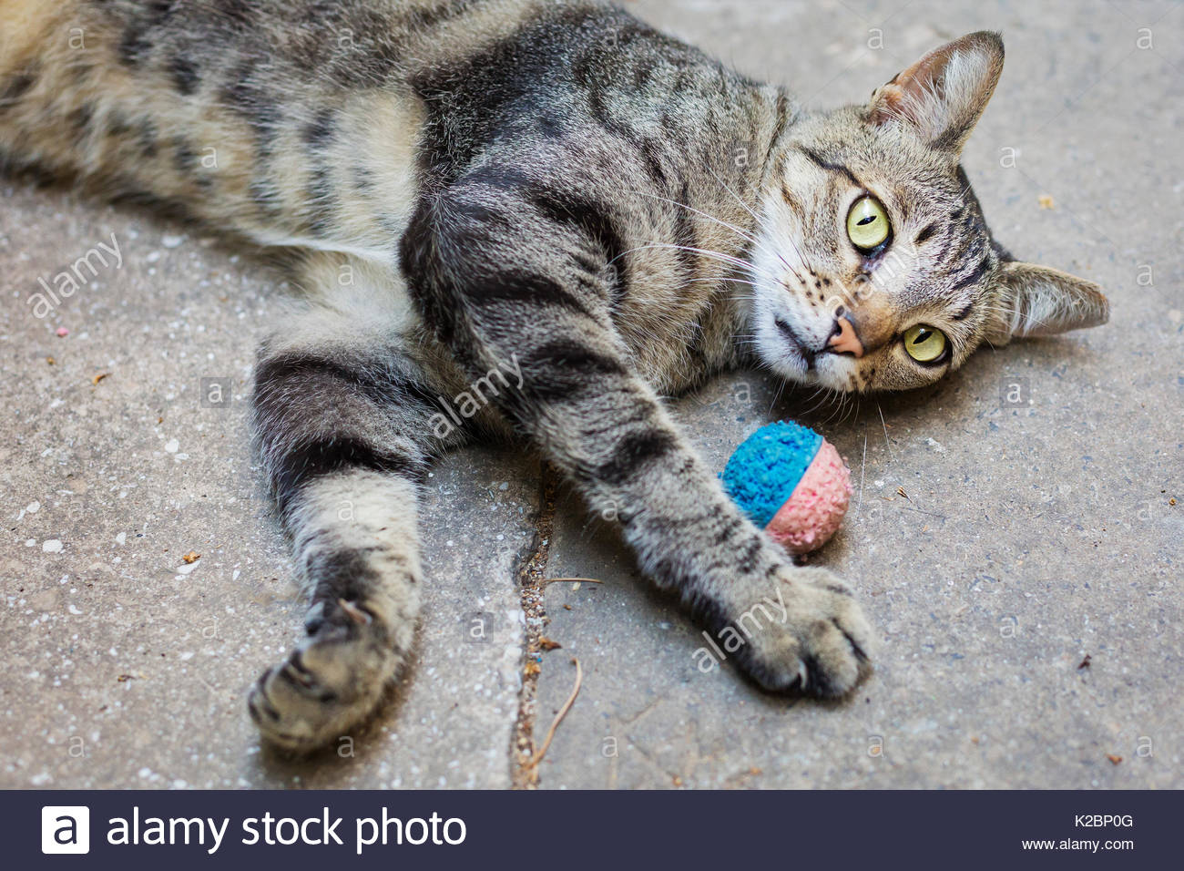 Cat plays with a ball - Stock Image