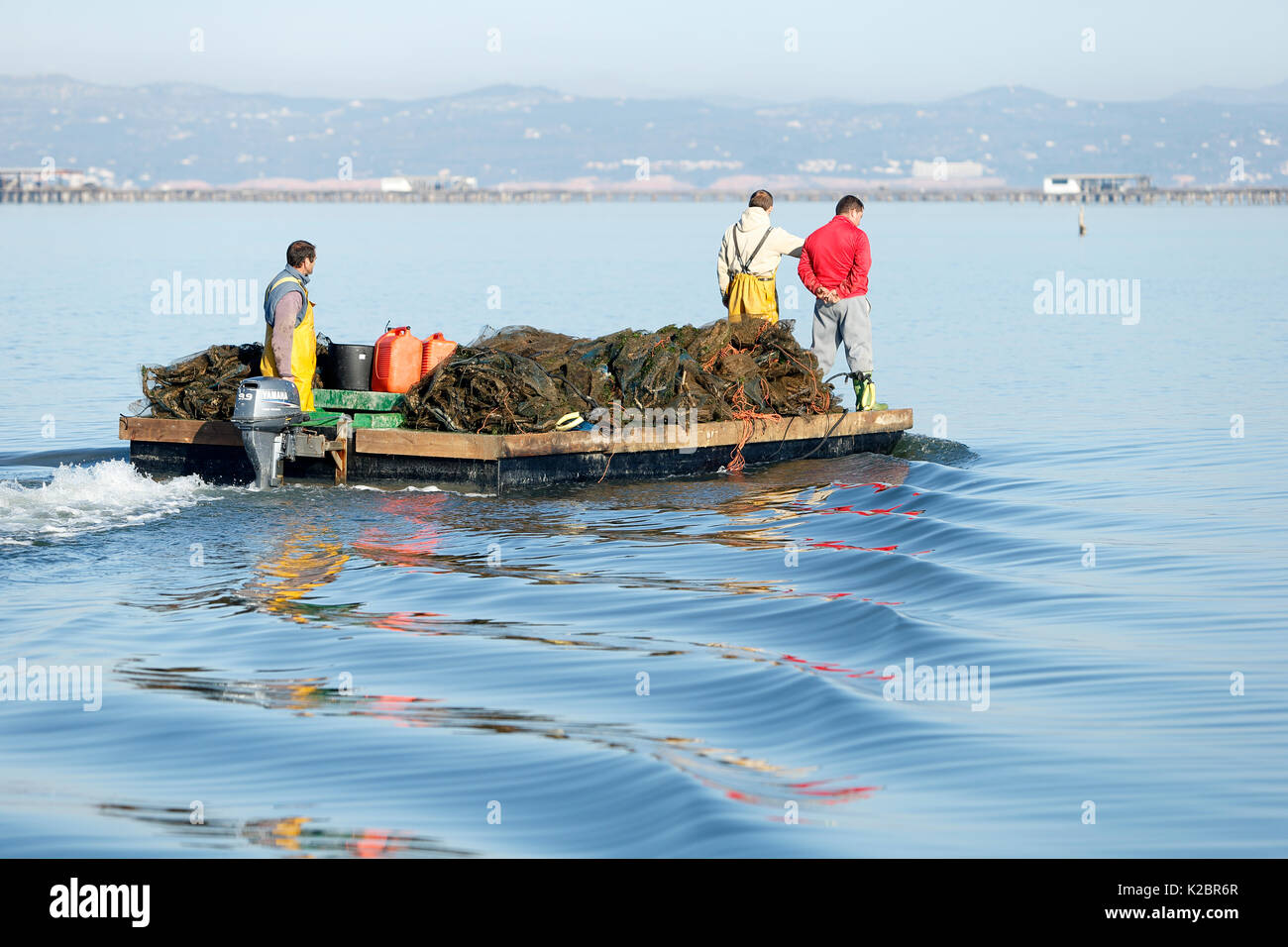 Mussel fishermen bringing in catch at sunrise, Ebro Delta, Tarragona. All non-editorial uses must be cleared individually. - Stock Image