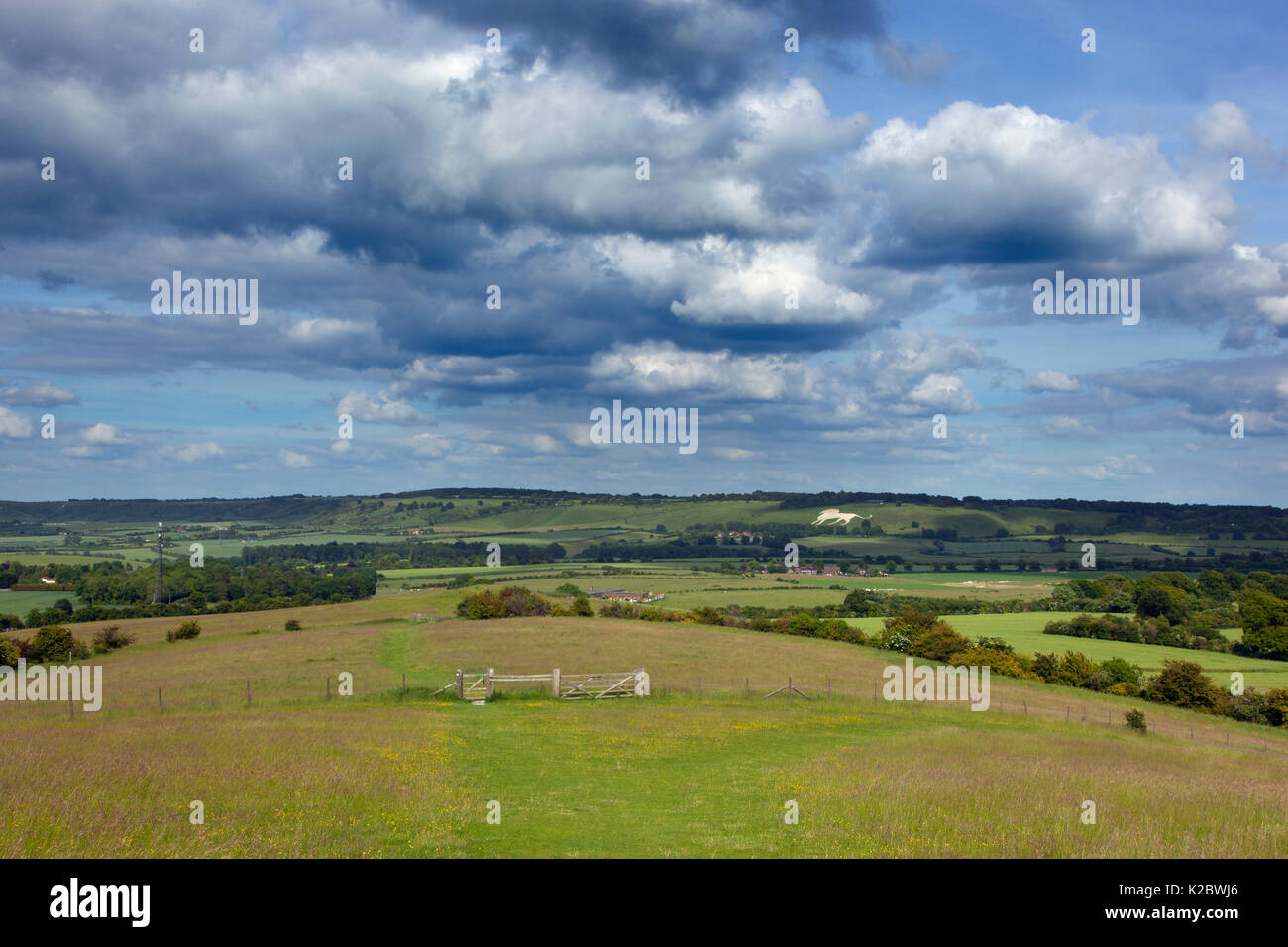 View towards Whipsnade and the Chalk Lion, Chiltern Downland, Ivinghoe Hills, Buckinghamshire, UK. June 2014. June. - Stock Image