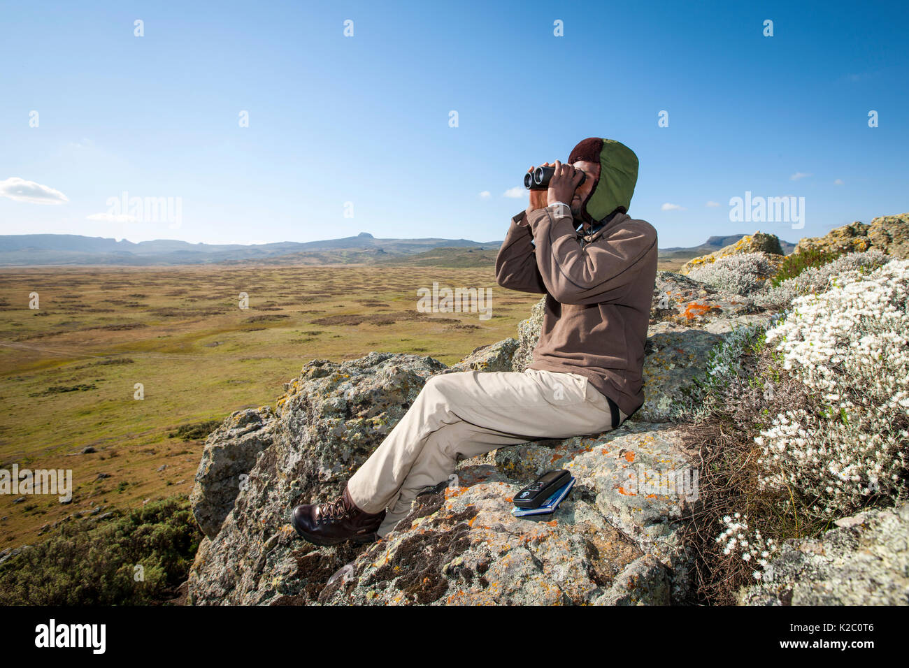 Ethiopian wolf conservation program (EWCP) monitor on the lookout for wolves, Ethiopia. November 2011. - Stock Image