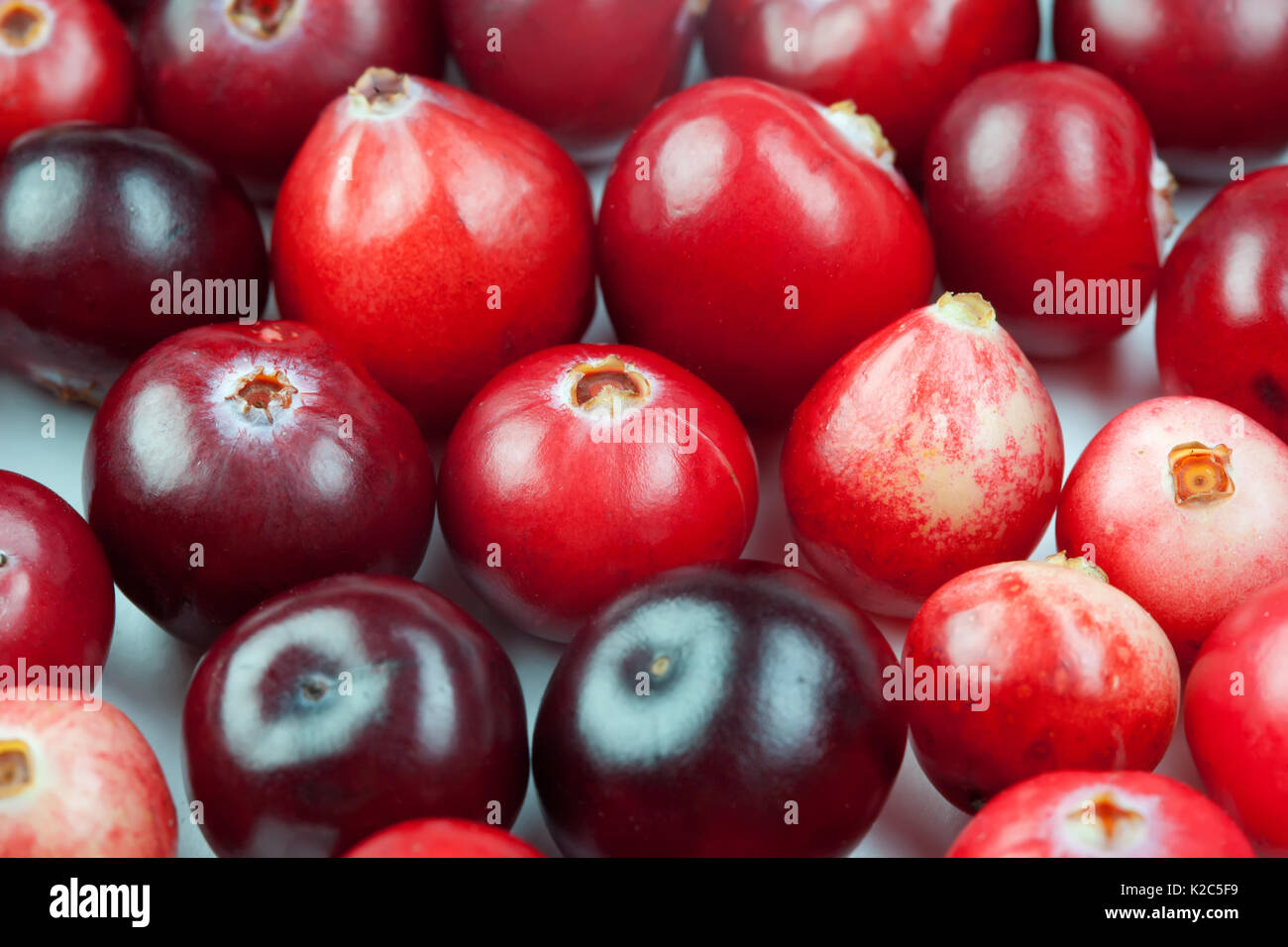 Wild cranberry color shape variation. Red ripe berries macro view. copy space. studio photo - Stock Image