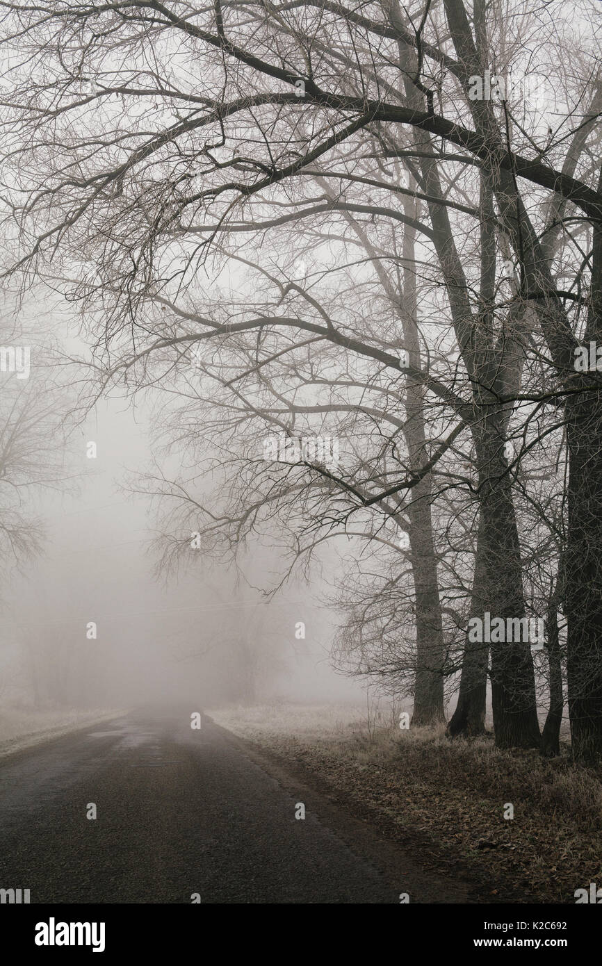 Foggy road and forest trees. Early morning landscape, frost on the ground. noise film effect. vertical - Stock Image