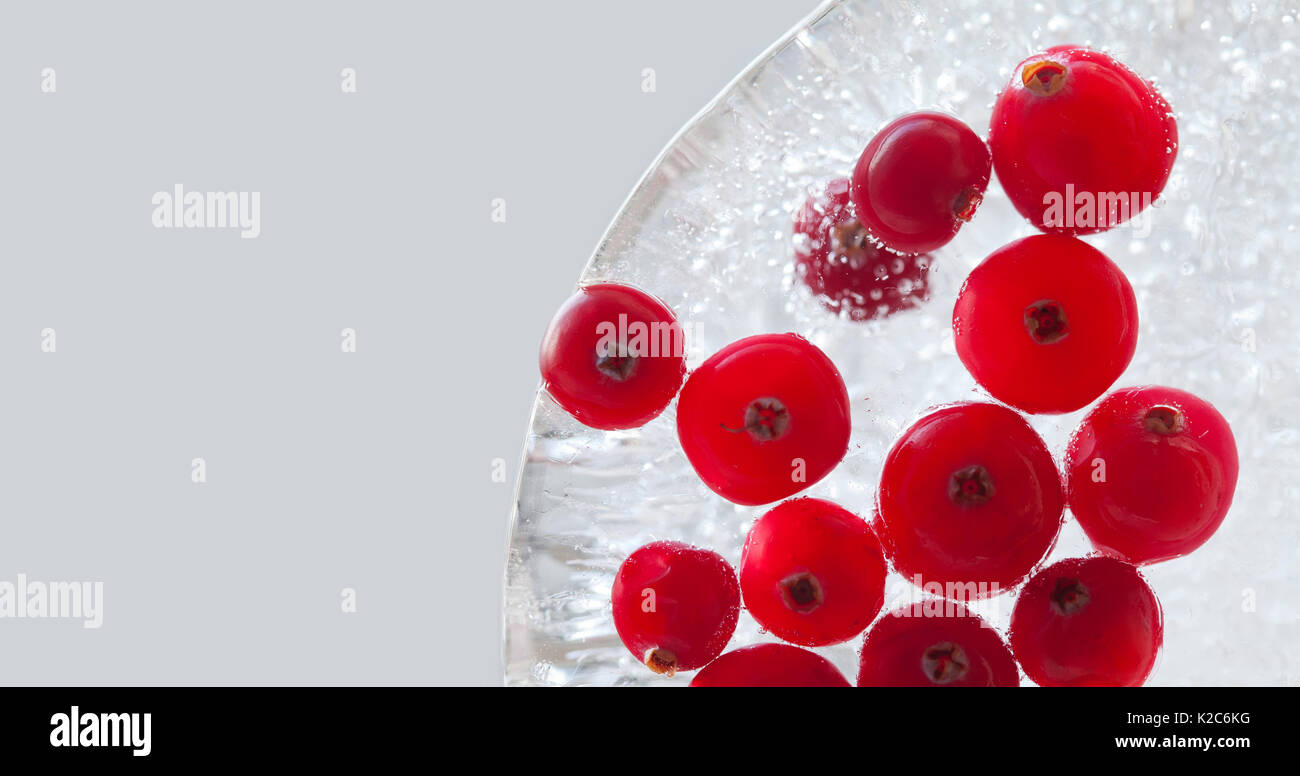 Natural forest cranberry frozen in piece of ice. Cranberries berries macro view. copy space, gray background. - Stock Image