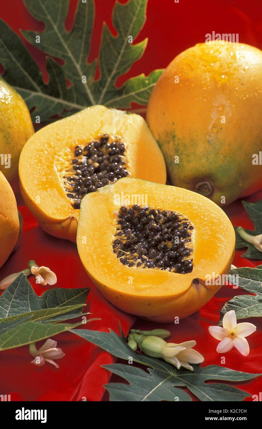Discarded papayas are examined at the U.S. Department of Agriculture Agricultural Research Service during an experiment to try and produce algal oils for biodiesel August 1, 2017 in Hilo, Hawaii. - Stock Image