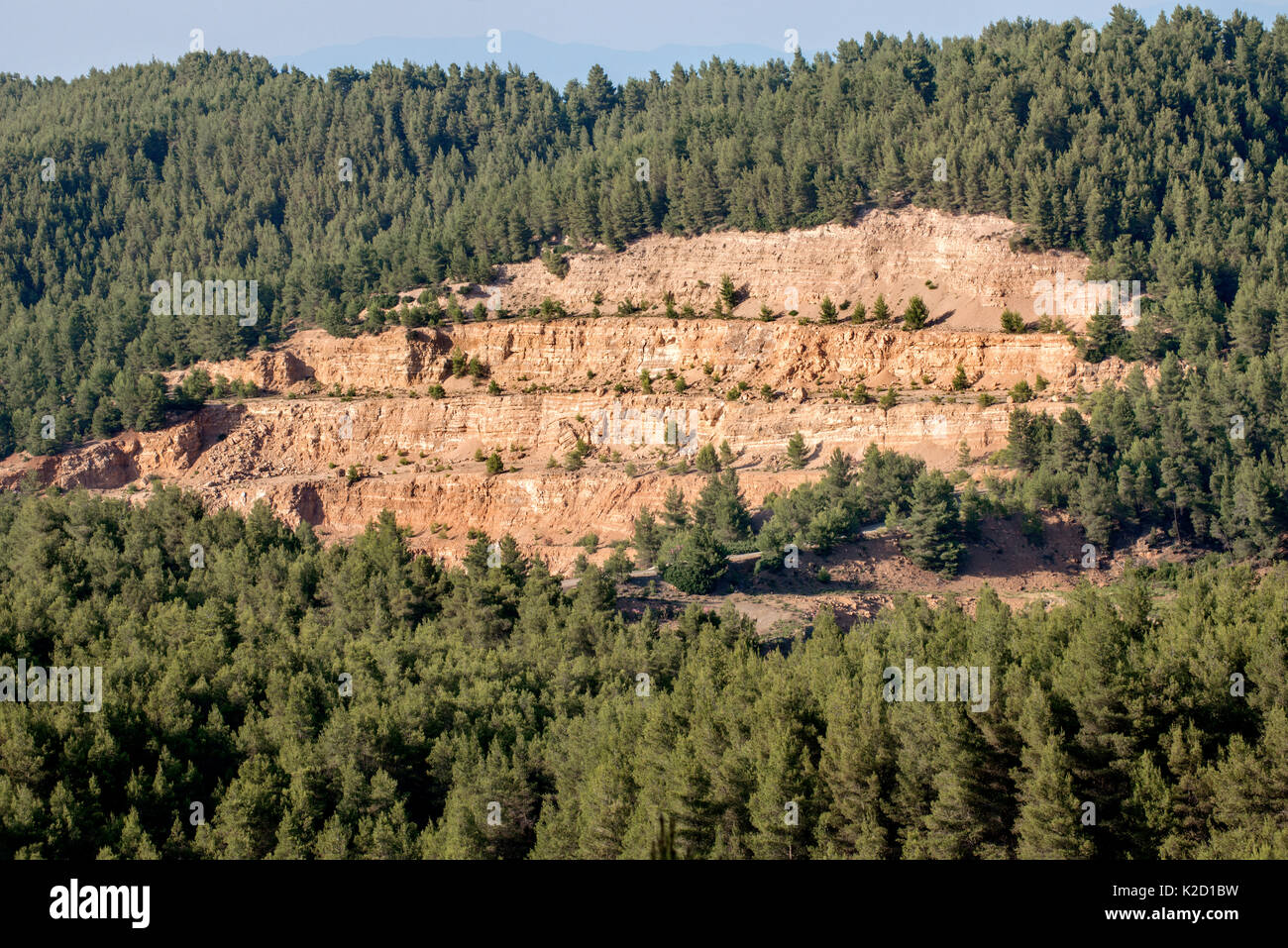 Forest clearing (pine tree cutting) Mantoudi, in the northern part of Euboea (Evia) island, The forest of Aleppo Pine (Pinus halepensis) was partially cleared by a Greek mining company for its magnesite mining operations. Greece, Mediterranean, July 2014. - Stock Image