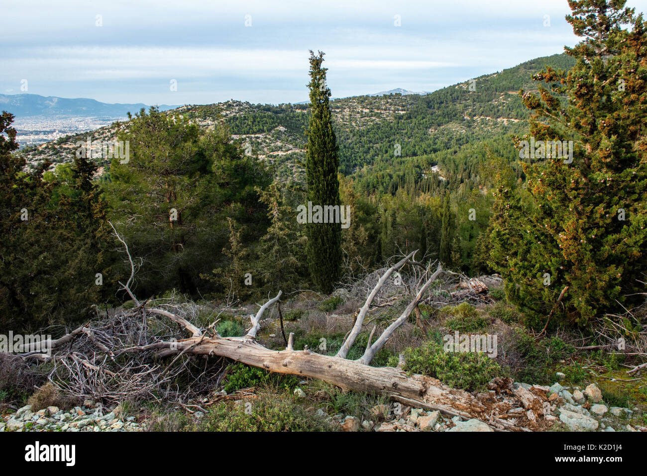 Landscape from  Mount Hymettus, Kessariani Aesthetic Forest, East-Central Attica, Greece, March 2015. - Stock Image