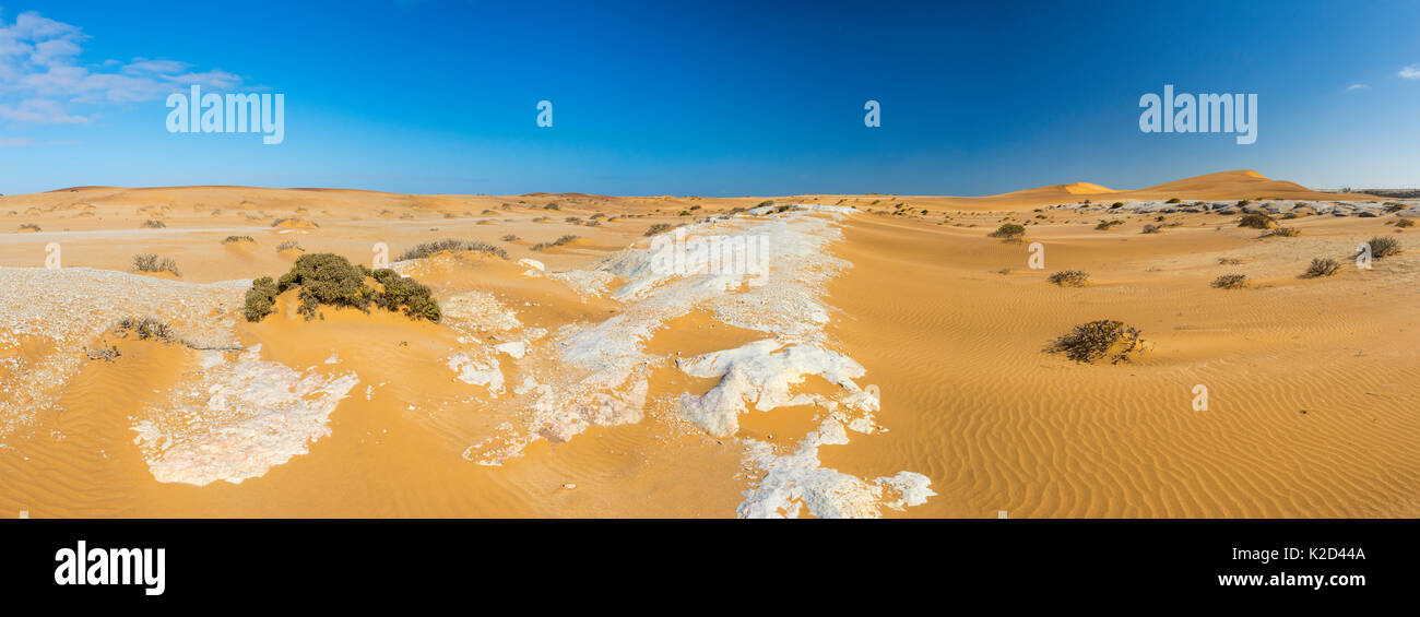 Sand dunes in Swakopmund with sparse vegetation, Namibia, Africa, June 2015. - Stock Image