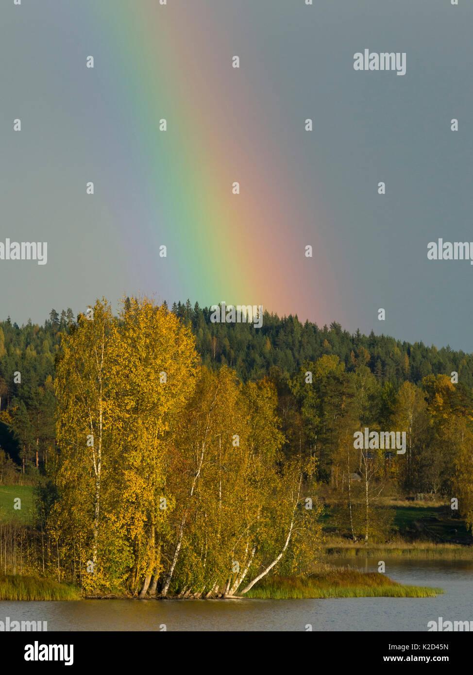 Rainbow over trees in autumn, Jyvaskyla, Finland, September 2015. Stock Photo
