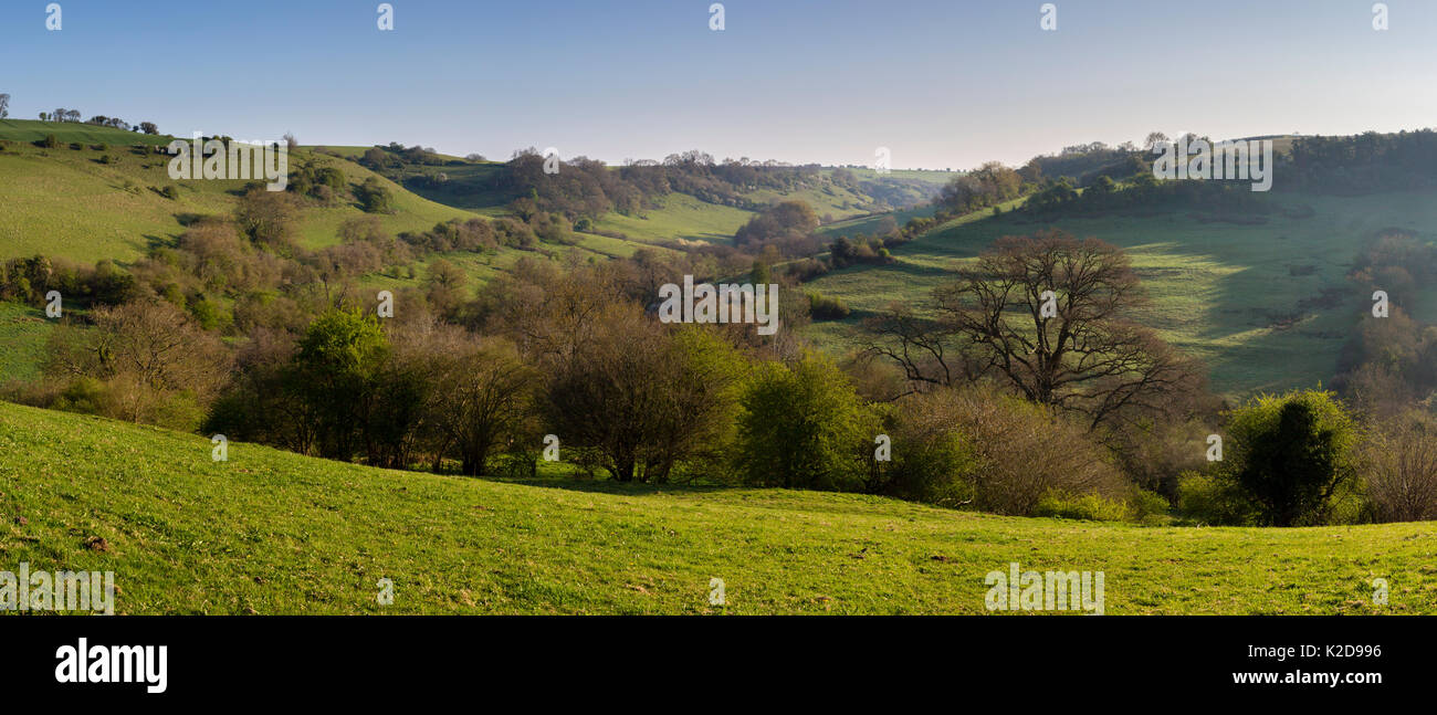 Rolling hills and marsh at St. Catherine Valley, Site of Special Scientific Interest (SSSI), Bath, South Gloucestershire, UK. April 2015. - Stock Image