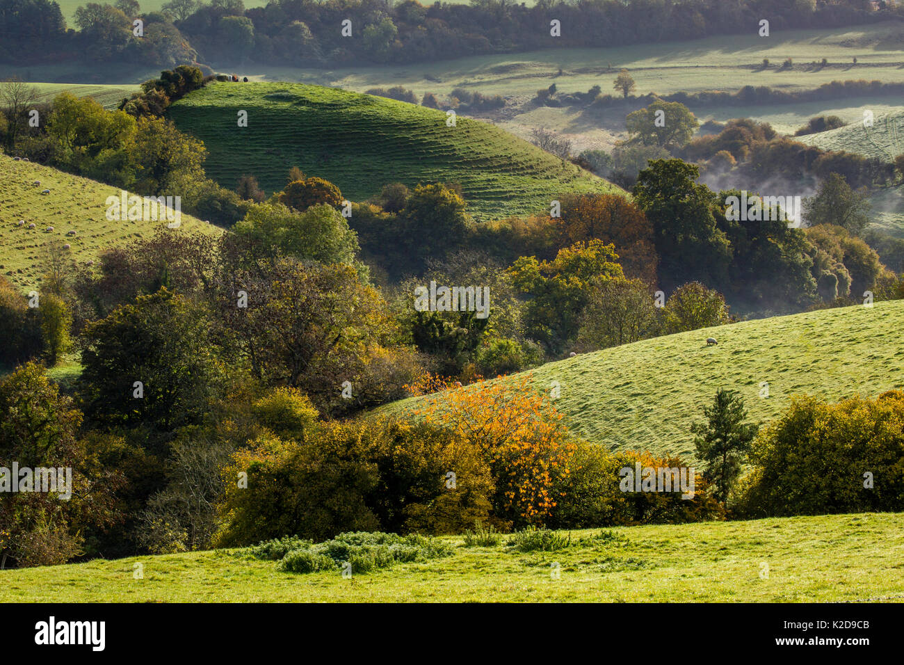 Autumn view towards St. Catherines Valley from Cold Ashton, Gloucestershire. St. Catherine's Valley is a biological Site of Special Scientific Interest. October 2015. - Stock Image