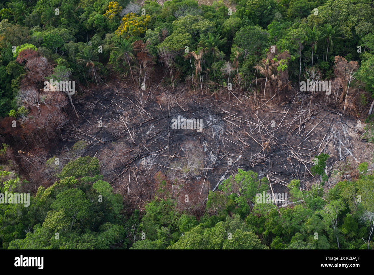 Slash and burn of tropical rainforest to make way for Amerindian agriculture, Rurununi savanna, Guyana, South America - Stock Image