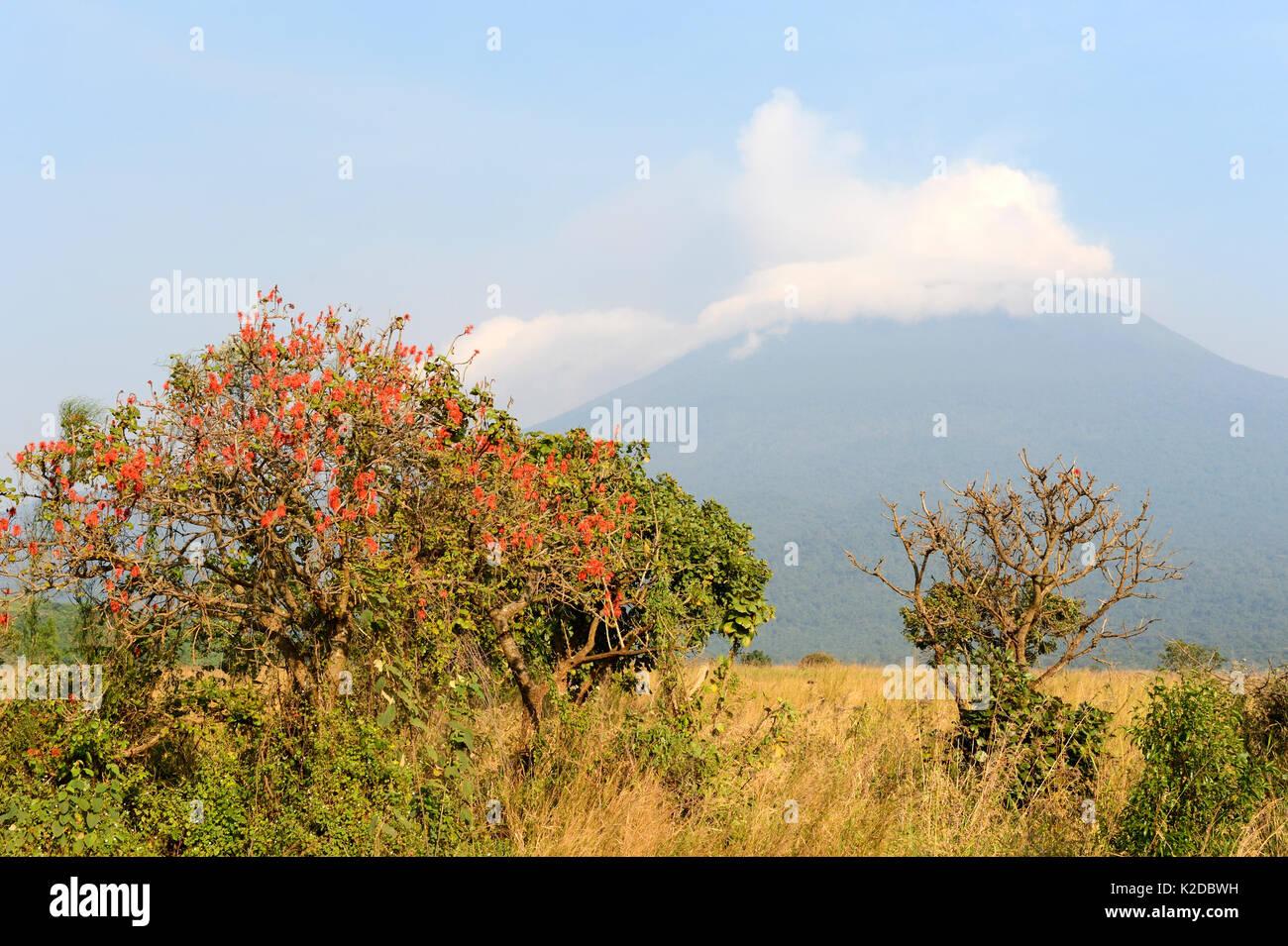 Mount Nyiragongo  smoking -  one of several active volcanoes in the Virunga Massif Volcano Range, Democratic Republic of Congo, Africa. July 2016 - Stock Image