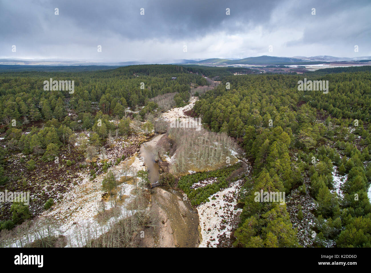 River Nethy flowing through Abernethy forest, Cairngorms National Park, Scotland, UK, March 2016. - Stock Image
