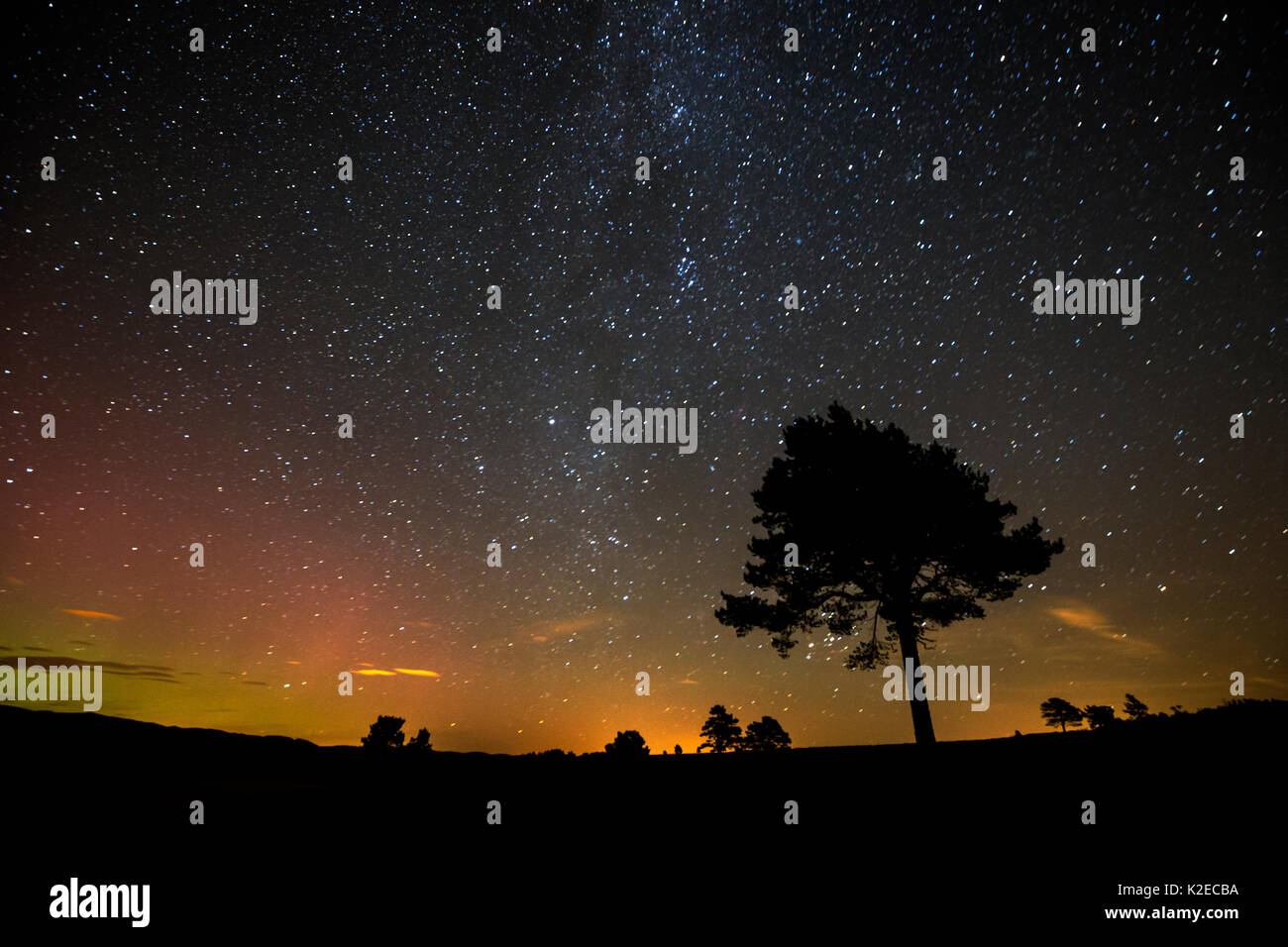Scots pine (Pinus sylvestris) silhouetted against night sky, Cairngorms National Park, Scotland, UK, October 2015. - Stock Image