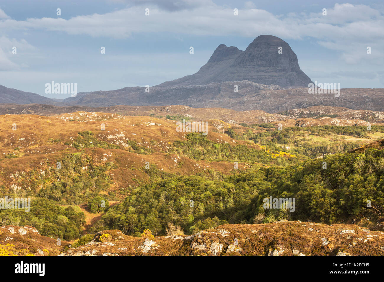 Hills of regenerating woodland across Assynt with Suilven in distance, Lochinver, Sutherland, Scotland, UK, May Stock Photo
