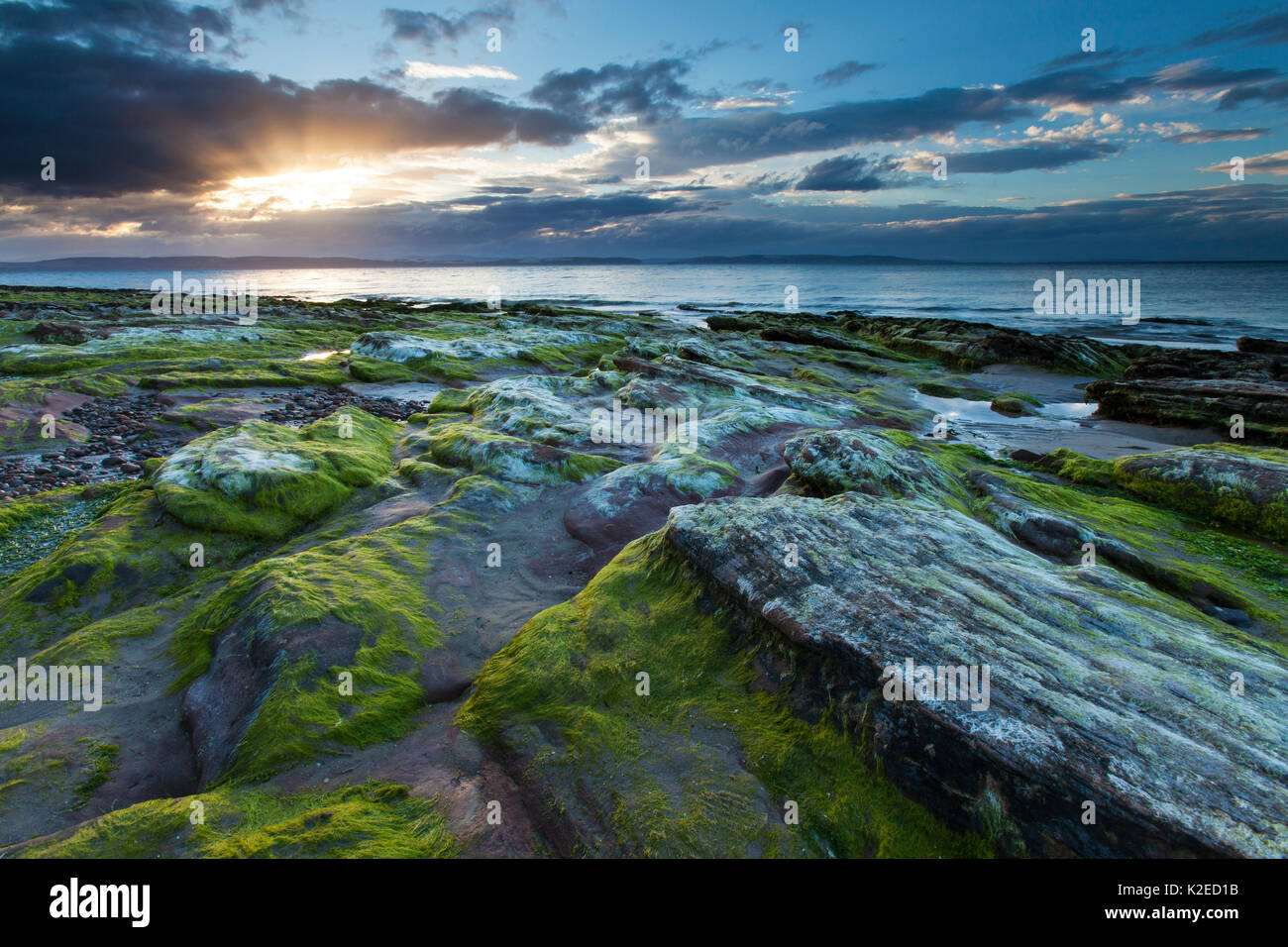 Seaweed covered rocky foreshore at sunset, Moray Firth, Moray, Scotland, UK, August 2013. Stock Photo