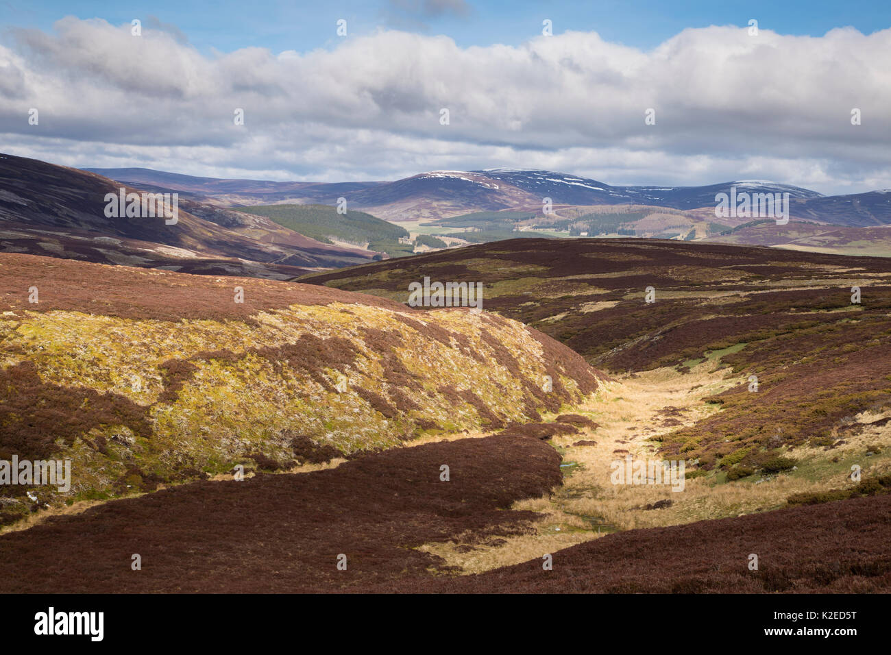 Patchwork of upland heather moorland on grouse shooting estate, northern Scotland, UK, April 2016. - Stock Image