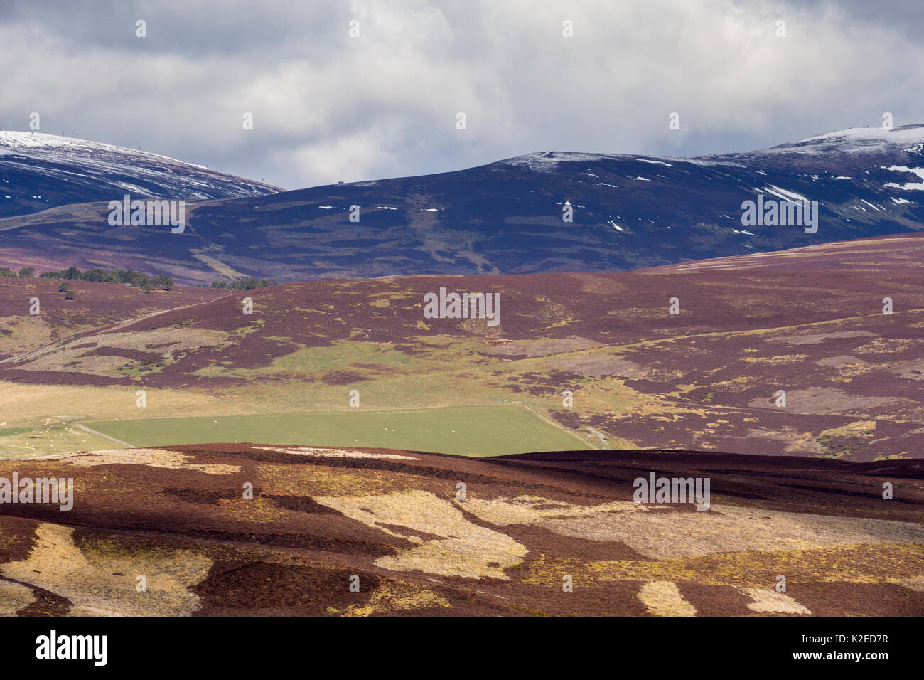 Mixed habitat of heather moorland and sheep pasture, Glenlivet, northern Scotland, UK, April 2016. - Stock Image