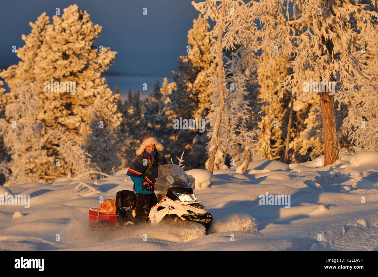 Nils-Torbjorn Nutti, owner and operator at Nutti Sami Siida, on snowmobile trip into the wilderness, Jukkasjarvi, Lapland, Laponia, Norrbotten county, Sweden Model released. - Stock Image