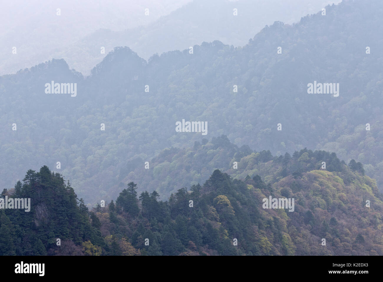 Mountains in Tangjiahe National Nature Reserve, Qingchuan County, Sichuan province, China. - Stock Image