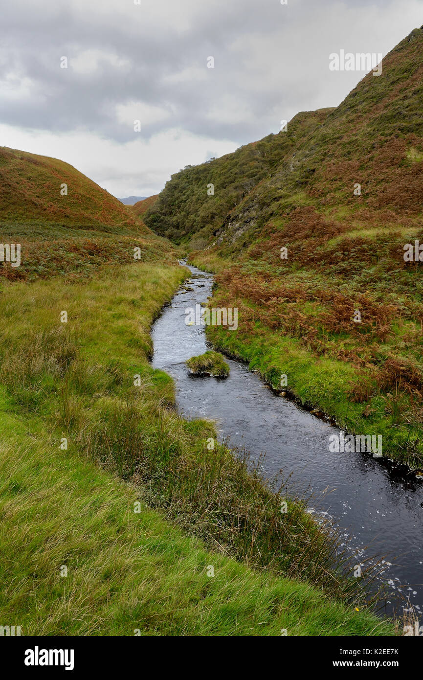 Moorland habitat in autumn with stream, Island of Jura, Scotland,UK, September - Stock Image
