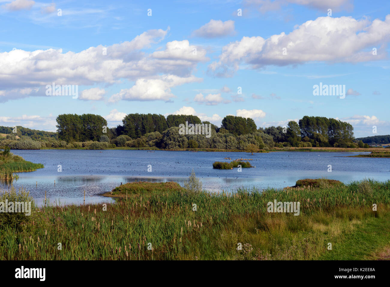 View of Rutland Water Nature Reserve, RAMSAR site, Special Protection Area and Site of Special Scientific Interest, August 2016, Egleton, Rutland, England. - Stock Image