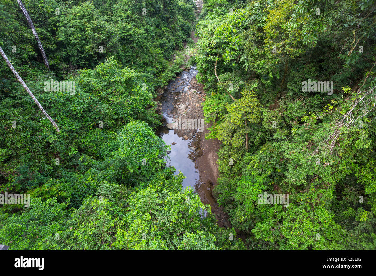 Looking down on dipterocarp forest canopy in Danum Conservation Area, Sabah, Borneo, Malaysia. - Stock Image