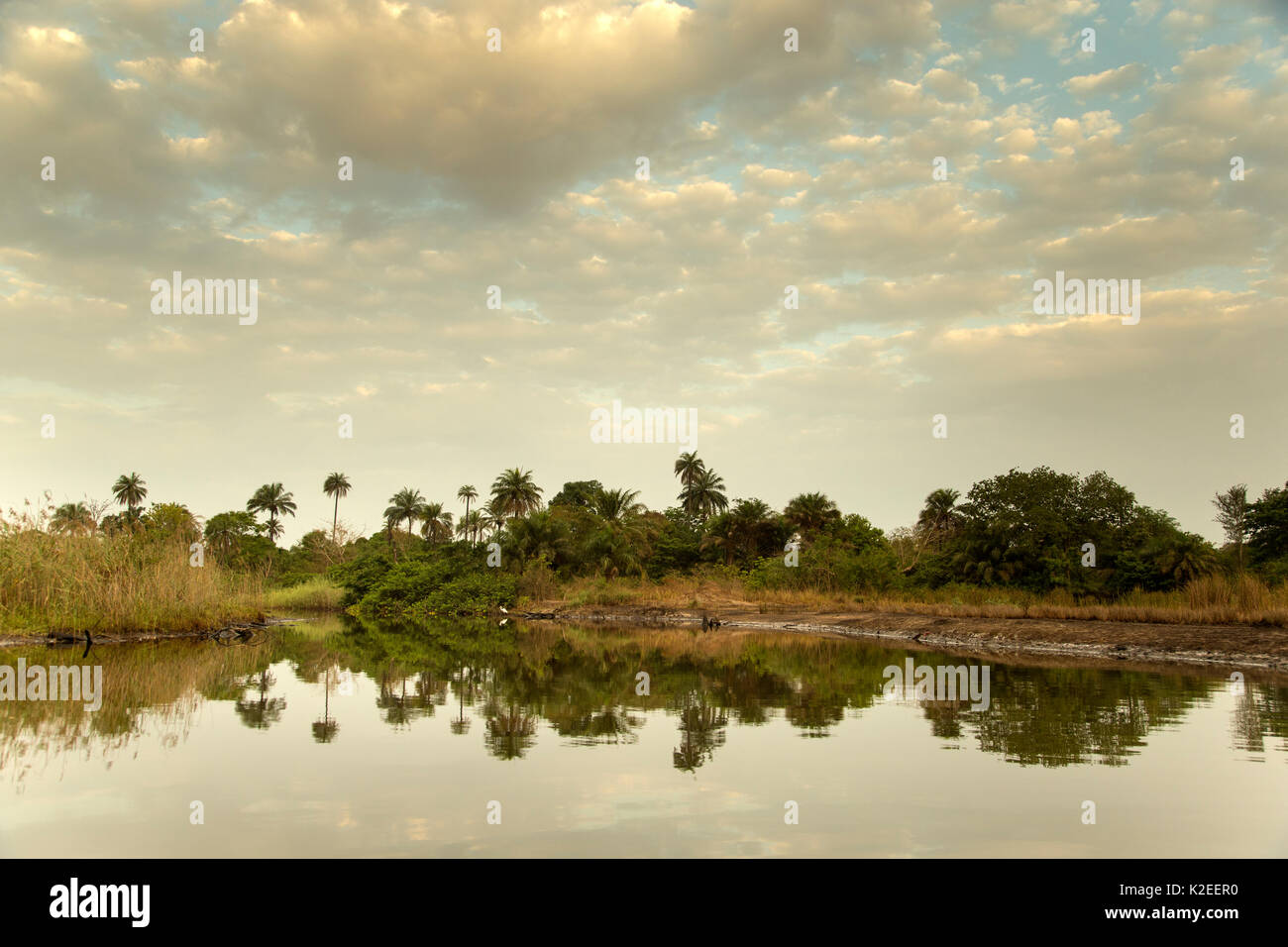 Mangrove creeks along the Marakissa River. These mangroves have been seriously degraded by human influence. Gambia, Africa, May. - Stock Image