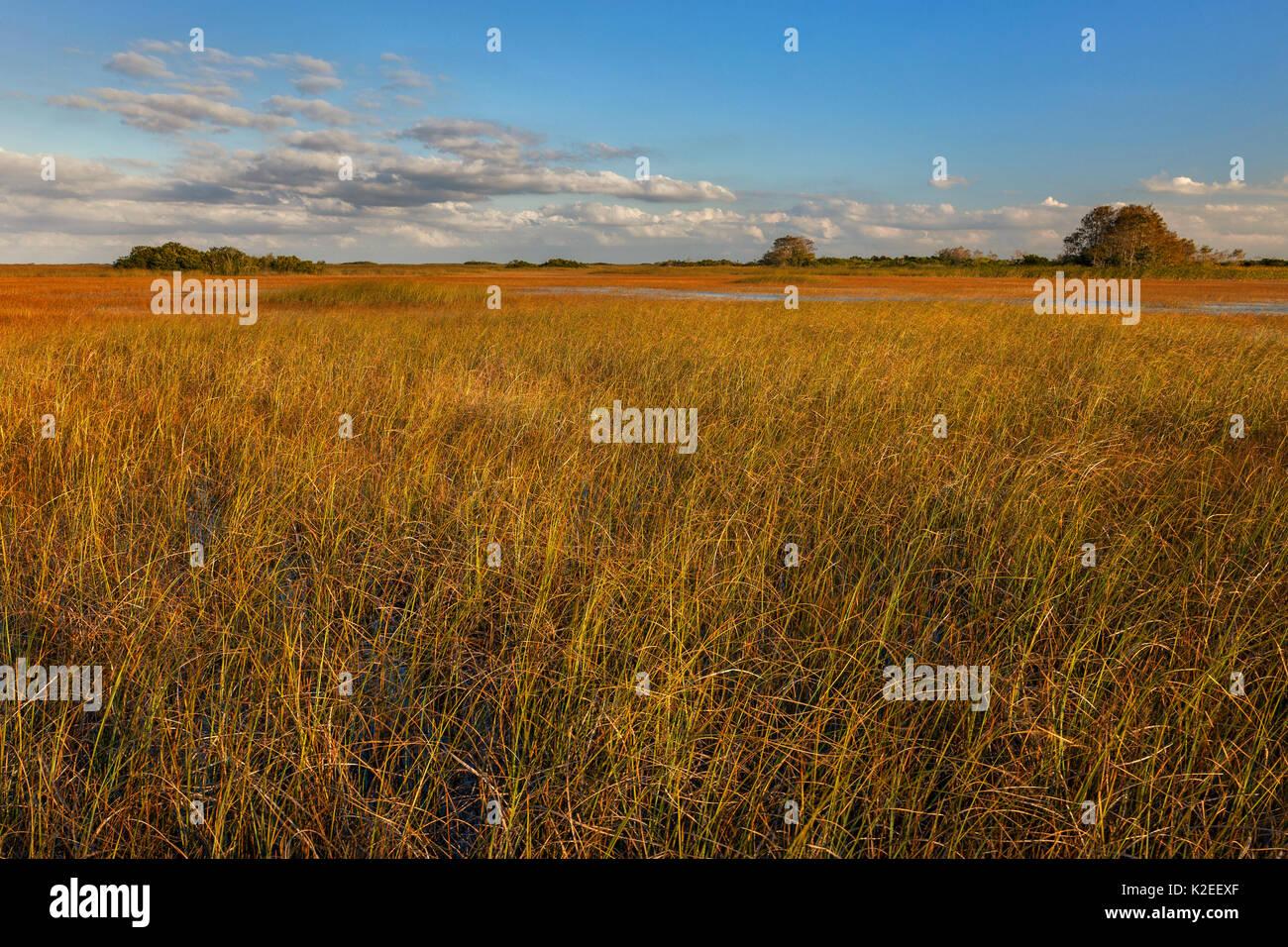 Sawgrass Prairie, Everglades National Park, Florida, USA. January. - Stock Image